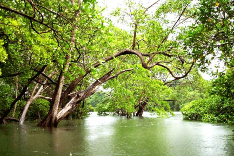 Tamarindo Mangrove Boat Tour